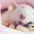 涙が出るほど可愛い!ネズミ達がクマのぬいぐるみを抱えて眠る、愛くるしい画像