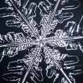 【動画】氷の結晶が美しく花開く!何もない所から徐々に大きく花を開いていく、綺麗な結晶の姿を収めたタイムラプス映像『 snowtime 』
