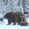 【動画】撮影現場にクマが現れ大慌て!オチまで含めて面白い、洗濯機の驚異的な洗浄力を訴求するSamsungのCM動画『 Bear Does Laundry 』