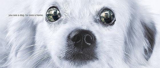 フィリピンの動物愛護団体 CARA Welfare Philippines による、保護された動物たちの里親制度を推進するキャンペーン『 I am home 』