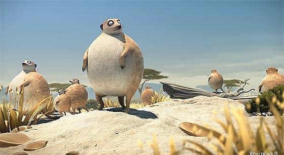 rollin-safari-meerkats1