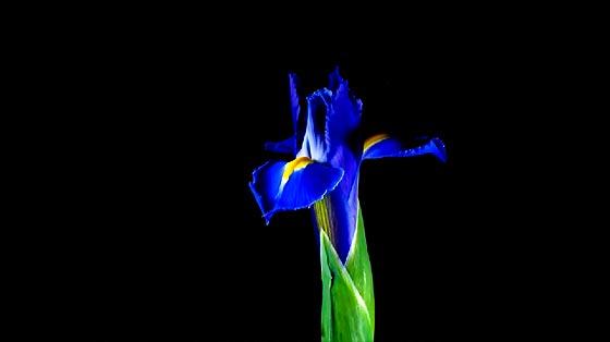 flowers-opening-timelapse3