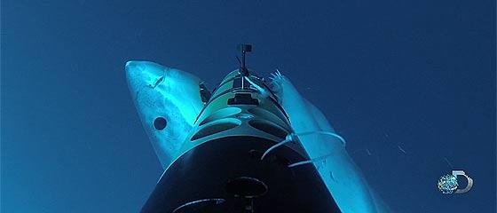 【動画】サメの大群が襲ってくる映画『シャークネード』も真っ青!?ホホジロザメの生息地グアダルーペ島で撮影された、大きなホホジロザメがカメラを搭載した海洋観測器に噛り付く映像