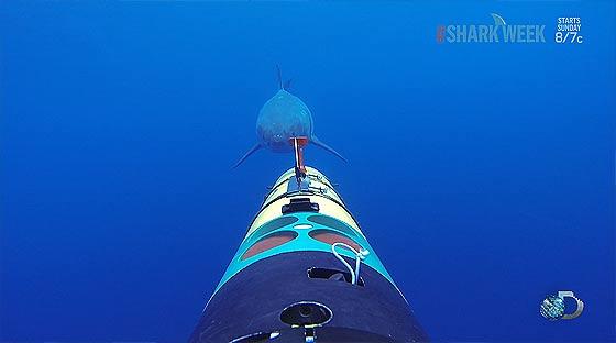 remus-sharkcam2