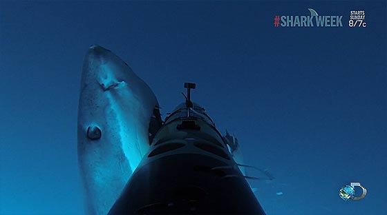 remus-sharkcam3