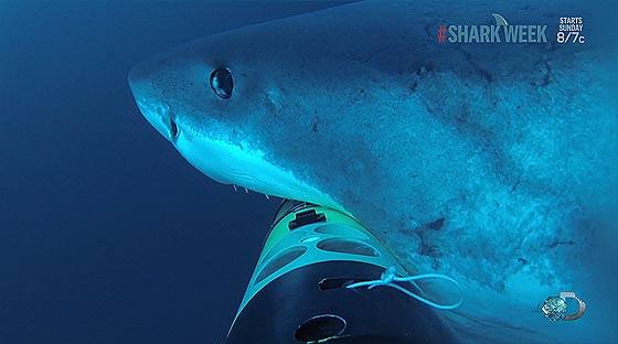 remus-sharkcam4
