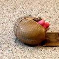 【動画】アルマジロがブタのオモチャで遊ぶ、とっても可愛い映像
