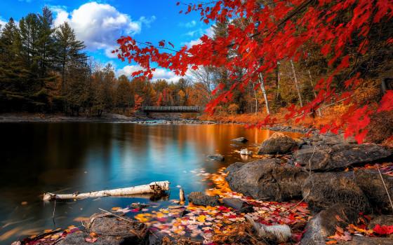 深まる秋にぴったりな、色鮮やかな紅葉の美しいデスクトップ壁紙素材『 29 Autumn Wallpapers For Your Desktop 』10