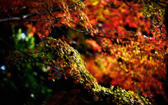 深まる秋にぴったりな、色鮮やかな紅葉の美しいデスクトップ壁紙素材『 29 Autumn Wallpapers For Your Desktop 』11