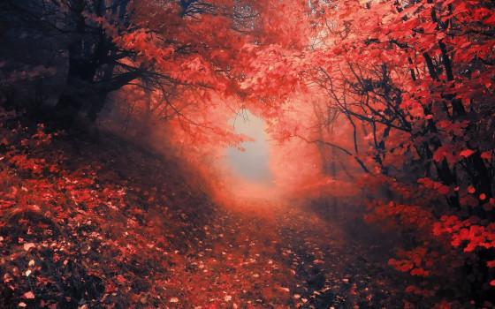深まる秋にぴったりな、色鮮やかな紅葉の美しいデスクトップ壁紙素材『 29 Autumn Wallpapers For Your Desktop 』12