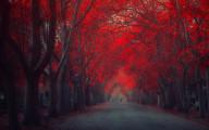 深まる秋にぴったりな、色鮮やかな紅葉の美しいデスクトップ壁紙素材『 29 Autumn Wallpapers For Your Desktop 』13