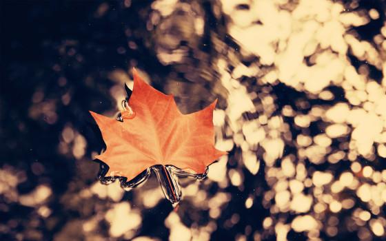 深まる秋にぴったりな、色鮮やかな紅葉の美しいデスクトップ壁紙素材『 29 Autumn Wallpapers For Your Desktop 』3