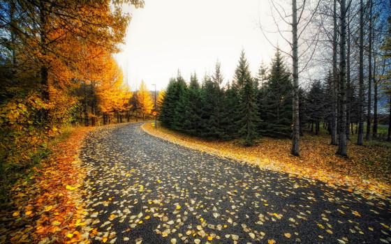 深まる秋にぴったりな、色鮮やかな紅葉の美しいデスクトップ壁紙素材『 29 Autumn Wallpapers For Your Desktop 』4