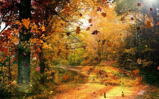 深まる秋にぴったりな、色鮮やかな紅葉の美しいデスクトップ壁紙素材『 29 Autumn Wallpapers For Your Desktop 』5