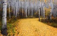 深まる秋にぴったりな、色鮮やかな紅葉の美しいデスクトップ壁紙素材『 29 Autumn Wallpapers For Your Desktop 』6