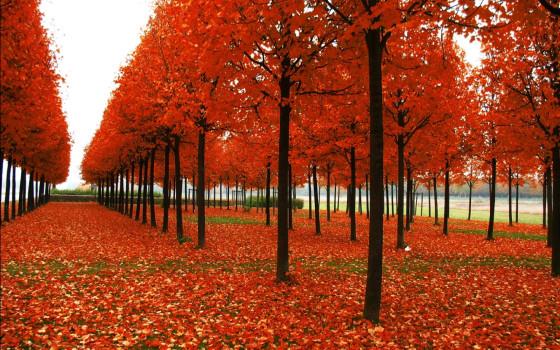 深まる秋にぴったりな、色鮮やかな紅葉の美しいデスクトップ壁紙素材『 29 Autumn Wallpapers For Your Desktop 』7
