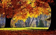 深まる秋にぴったりな、色鮮やかな紅葉の美しいデスクトップ壁紙素材『 29 Autumn Wallpapers For Your Desktop 』8