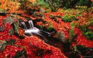 深まる秋にぴったりな、色鮮やかな紅葉の美しいデスクトップ壁紙素材『 29 Autumn Wallpapers For Your Desktop 』9