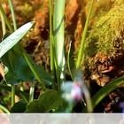 【オススメ】鳥のさえずりをエンドレスで流してくれるウェブサイト『 Birdsong.fm 』