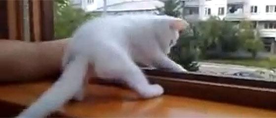 【動画】腕を窓の外に出すと『あぶないニャ!早く家の中に腕を戻すニャ!』と、可愛い白猫が腕を引っ張り上げてくれる様子が微笑ましい