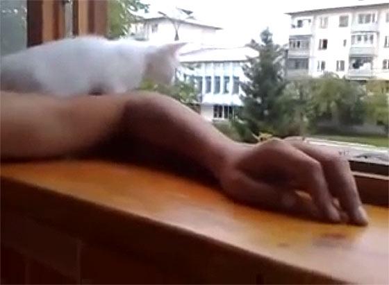 腕を窓の外に出すと『あぶないニャ!早く家の中に腕を戻すニャ!』と、可愛い白猫が腕を引っ張り上げてくれる様子が微笑ましい1