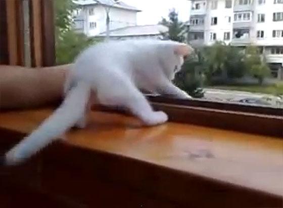 腕を窓の外に出すと『あぶないニャ!早く家の中に腕を戻すニャ!』と、可愛い白猫が腕を引っ張り上げてくれる様子が微笑ましい3