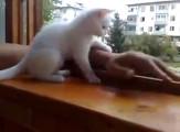 腕を窓の外に出すと『あぶないニャ!早く家の中に腕を戻すニャ!』と、可愛い白猫が腕を引っ張り上げてくれる様子が微笑ましい4