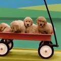 【動画】可愛い犬達が登場するピタゴラスイッチのようなCM 『Dog Goldberg machine by Beneful』