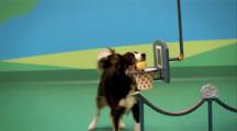 可愛い犬達が登場するピタゴラスイッチのようなCM 『Dog Goldberg machine by Beneful』1