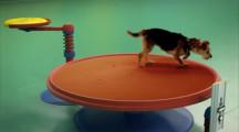 可愛い犬達が登場するピタゴラスイッチのようなCM 『Dog Goldberg machine by Beneful』2