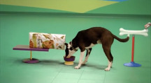 可愛い犬達が登場するピタゴラスイッチのようなCM 『Dog Goldberg machine by Beneful』3