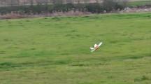 天空の城ラピュタにも出てきたオーニソプター『フラップター』の、空飛ぶラジコンモデル映像5