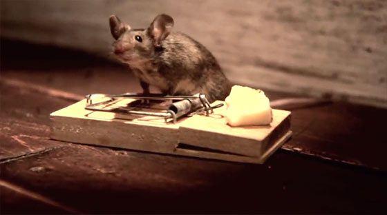 もしもこんなチーズがあったなら、というデモリール2