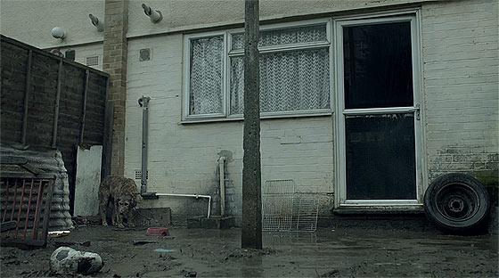 環境によって良い方にも悪い方にも転がってしまう事を取り上げた、ペディグリーのCM『 Pedigree 'Bad Dog/ Good Dog' 』1