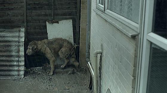 環境によって良い方にも悪い方にも転がってしまう事を取り上げた、ペディグリーのCM『 Pedigree 'Bad Dog/ Good Dog' 』2