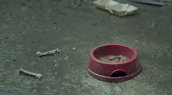 環境によって良い方にも悪い方にも転がってしまう事を取り上げた、ペディグリーのCM『 Pedigree 'Bad Dog/ Good Dog' 』3