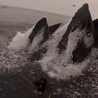 【動画】間一髪!危うくザトウクジラに食べられる所だったダイバー達の映像