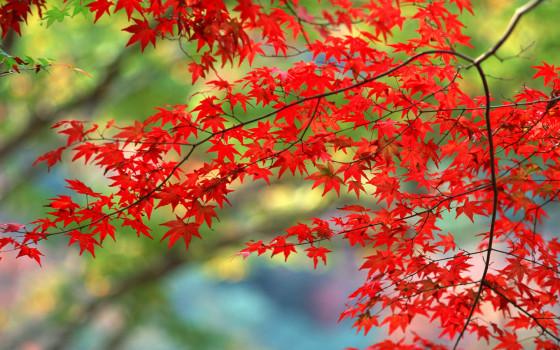 彩りも鮮やかな秋の紅葉をテーマにした壁紙素材が配布されています『 14 Colorful Autumn Wallpapers 』4