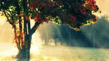 彩りも鮮やかな秋の紅葉をテーマにした壁紙素材が配布されています『 14 Colorful Autumn Wallpapers 』6
