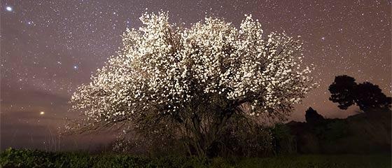 【動画】スペイン領カナリア諸島のラ・パルマ島の雄大な自然を収めた、息を飲む美しさのタイムラプス映像『 El Cielo de La Palma 』