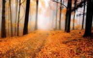 彩りも鮮やかな秋の紅葉をテーマにした壁紙素材が配布されています『 14 Colorful Autumn Wallpapers 』1