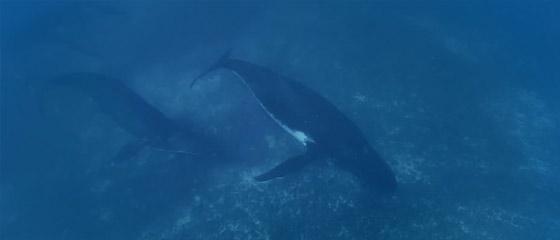 【動画】ビデオカメラ『GoPro』の、深い海の底でクジラの姿を捉えるキャンペーン動画