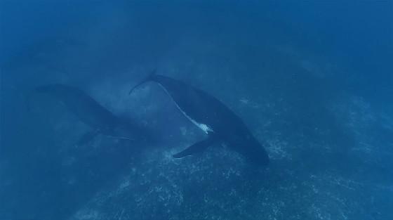 ビデオカメラ『GoPro』の、深い海の底でクジラの姿を捉えるキャンペーン動画6