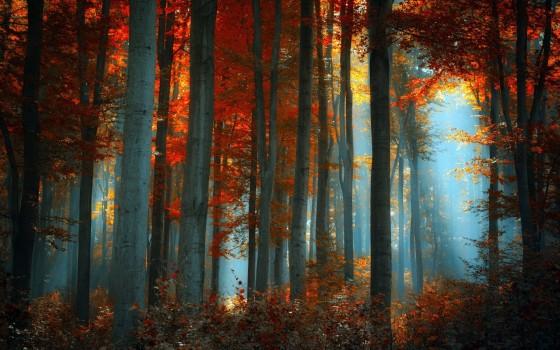 彩りも鮮やかな秋の紅葉をテーマにした壁紙素材が配布されています『 14 Colorful Autumn Wallpapers 』2