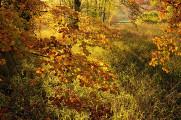 心洗われるほど美しい。風景写真家が腕を競うコンテスト『 Landscape Photographer of the Year 2013 』の入賞作品が素晴らしい。2