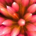 長時間露光とリフォーカスという技法で撮影した花火の画像が美しい