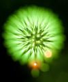長時間露光とリフォーカスという技法で撮影した花火の画像が美しい4