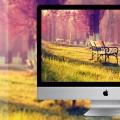 【素材】ミニマルで繊細な写真のデスクトップ壁紙画像が配布されています