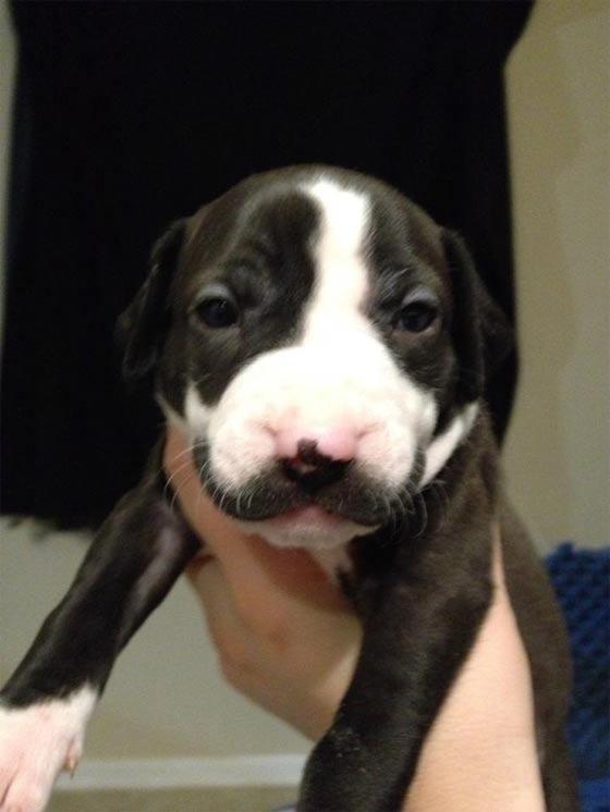 口髭をかやした子犬2
