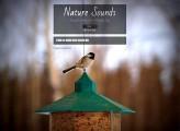 『雨の音・波の音・川のせせらぎ・鳥のさえずり』をエンドレスに流してくれるウェブサイト『 Nature Sounds 』
